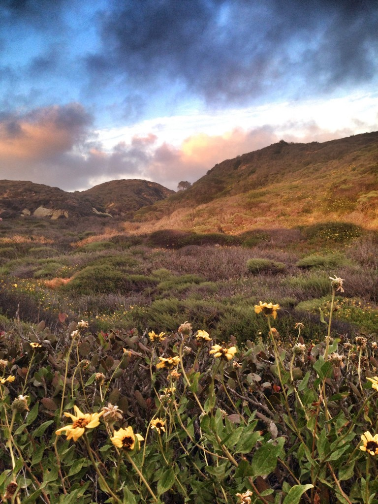 Photo of Torrey Pines State Park during one of my runs there (hiked uphill, run on the flat/downhill)